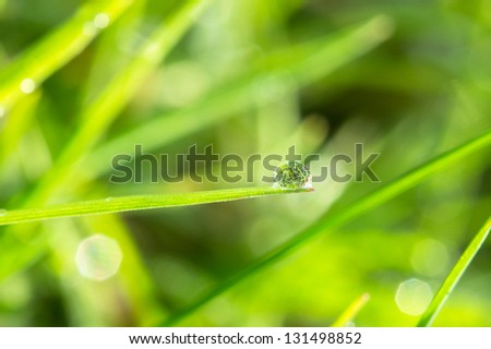Dew on the green grass extreme close up