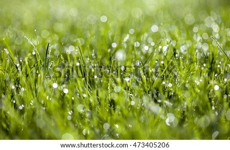 dew on the lawn