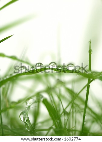 Dew - Water Drops on Foliage in the Morning - stock photo