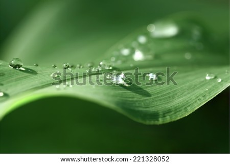dewdrops on the leaf