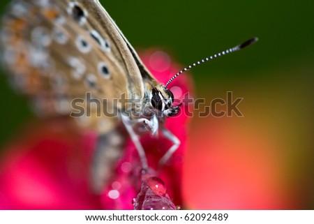 dewy butterfly - stock photo