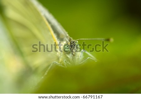 dewy face of butterfly is surrounded by green leaves