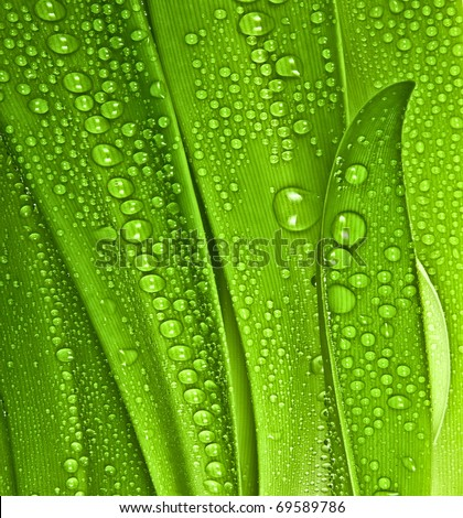dewy grass - stock photo