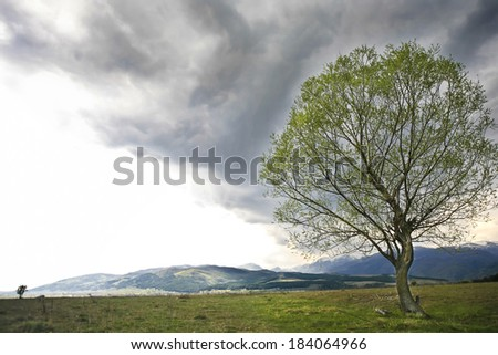 diagonal clouds on spring season  - stock photo