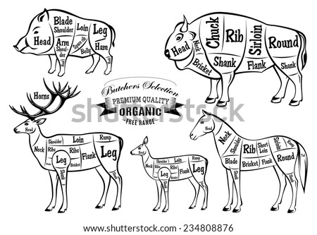 Deer Cuts Diagram Correct additionally 794871 additionally Elk Hit By Car moreover Aitch bone pork further 147563325263785325. on cuts of venison meat chart