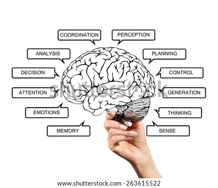 Diagram of brain functions, drawn with a marker on transparent screen hand - stock photo