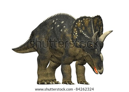 diceratops dinosaur grazing and eating.  a herbivorous dinosaur from the Maastrichtian age. Closeup head shot Isolated on white background. Clip art cutout illustration - stock photo