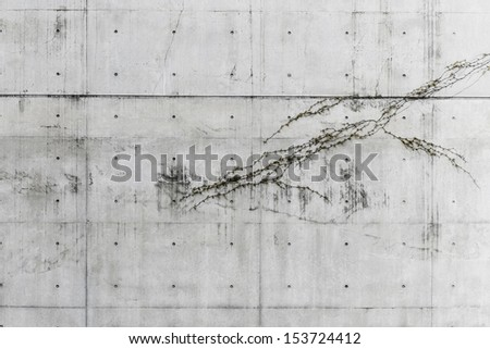 die-cast pattern concrete wall with small plant - stock photo
