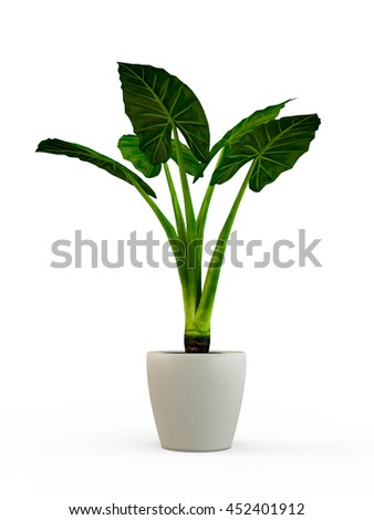 Dieffenbachia potted plant isolated on white background. 3D Rendering, Illustration.