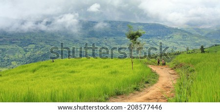 Dien Bien Phu, Dien Bien, Vietnam August 1, 2014: Hmong upland rice fields on the outskirts of the city of Dien Bien Phu, Dien Bien