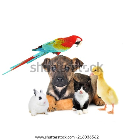 different animals: dog, cat, rabbit, parrot  - stock photo