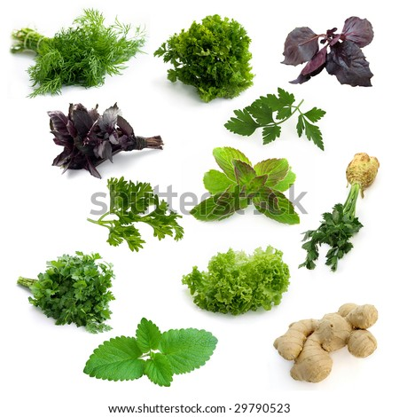 Different aromatic herbs - stock photo