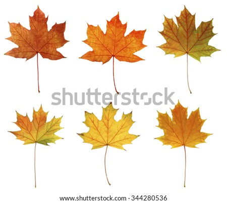 Different autumn leaves, isolated on white - stock photo