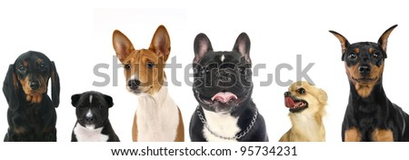 Different breeds of a small dogs
