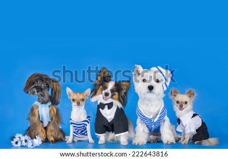 Different breeds of dogs on a blue background - stock photo