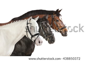 different breeds of horses in front of a white background, isolated