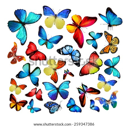 Different color butterflies - stock photo