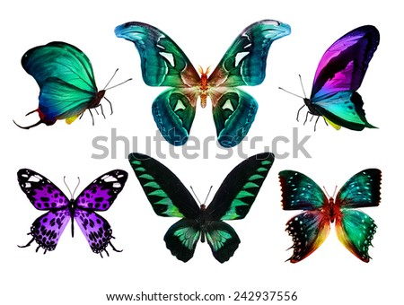 Different color butterflies on white - stock photo