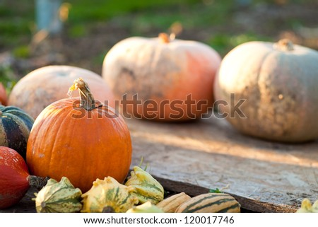 Different colored pumpkins - stock photo