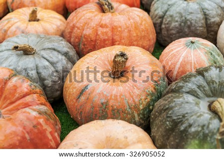 Different colorful autumnal pumpkins - stock photo