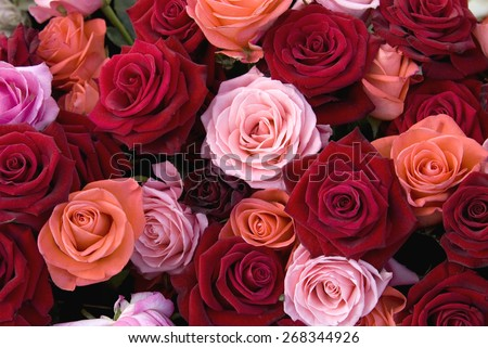 Different color roses stock images royalty free images for Different color roses bouquet