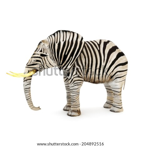 Different, Elephant with zebra stripes on a white background. - stock photo