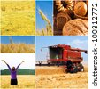 different images on the subject of summer and crop and harvesting - stock photo