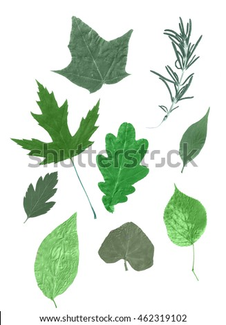 Different isolated leafs on white background. Silhouette of different leafs. Nature design