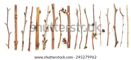 Different kind of twigs, A lot of branches of different plants and trees on white - stock photo
