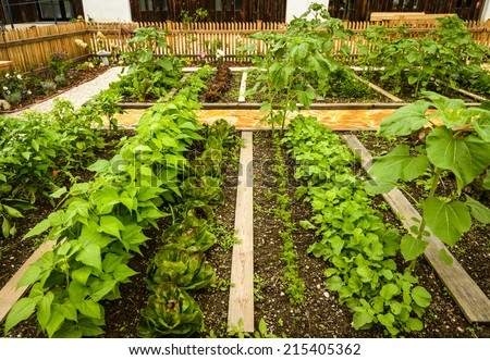 Different kind of vegetables in garden planted in rows. - stock photo