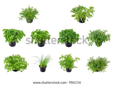 Different kinds of isolated herbs, from top left to right: Rosemary, Sage, Basil, Parsley, Lemon balm, Oregano, Coriander, Chive, Chervil and Thyme - stock photo