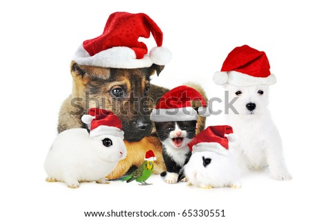 Different pets wearing Santa Claus hats - stock photo