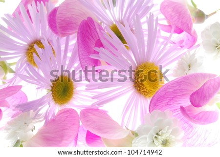 different pink flowers - stock photo