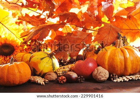 Different pumpkins with nuts, maize, berries and grain in front of highlighted oak foliage - stock photo