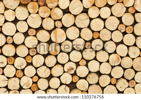different sections of the tree - stock photo
