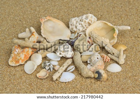 Different shells and corals on the send - stock photo
