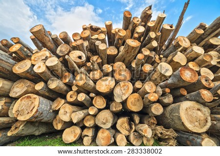 Different size of beech logs forming a big pile of timber against blue sky - stock photo