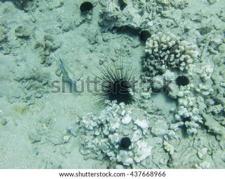 Different species of sea urchin at the bottom of the ocean and a fish - stock photo