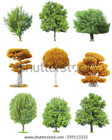Different trees, isolated on white background - stock photo