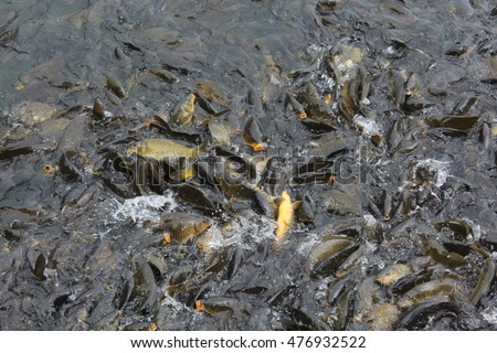 Different fish type stock photos royalty free images for Different type of water