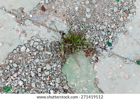 Difficulties overcom concept. Grass grow through cement pavement. Copyspace. Brocken concrete surface covered with small gravel chips.  - stock photo