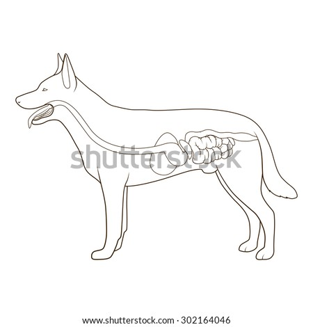 animal digestive system stock images  royalty