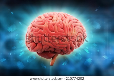 Digital illustration of brain in colour background - stock photo
