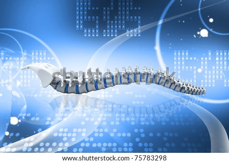 Digital illustration of human spine in colour background - stock photo