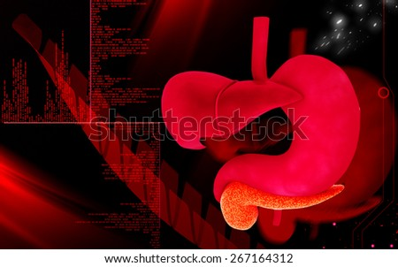 Digital illustration of Liver and stomach in colour  background  - stock photo