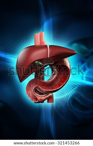 Digital illustration of stomach and liver in colour background - stock photo