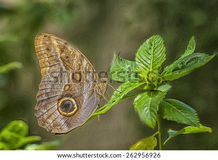 Digital oil painting of an owl butterfly - stock photo