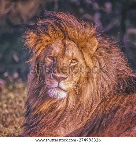 Digital oil painting of lion head and mane - stock photo