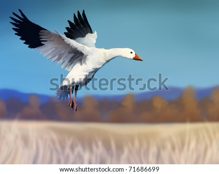 digital painting of a white snow goose flying over a field of golden grass under a cool Winter sky - stock photo