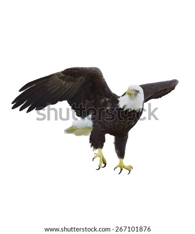 Digital Painting Of American Bald Eagle - stock photo
